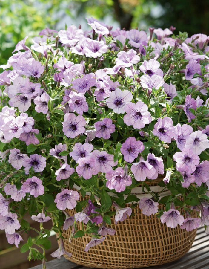 07411_LavenderSky1
