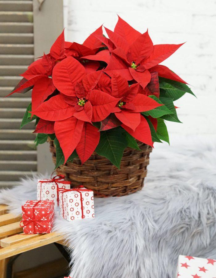 ChristmasBeauty