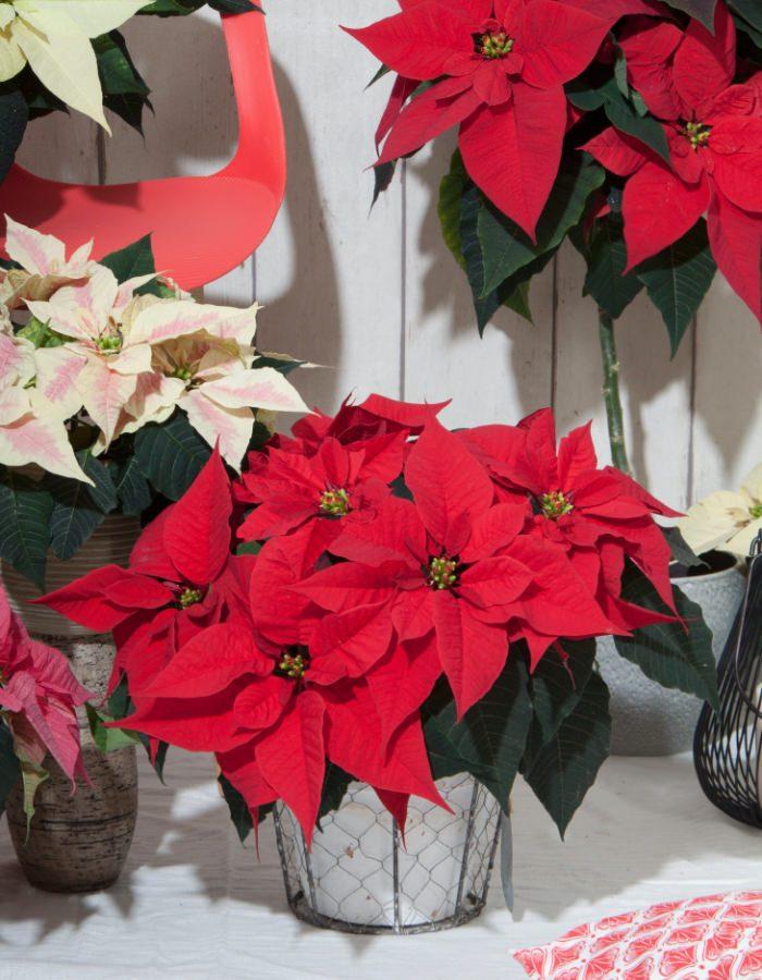 ChristmasFeelings11
