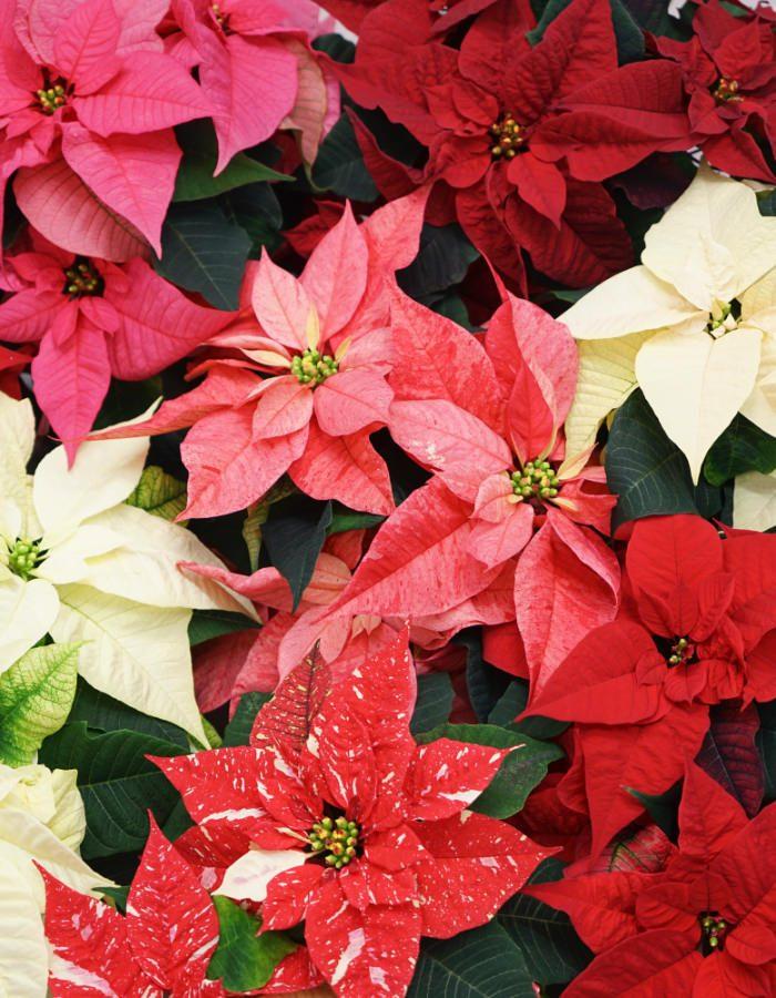 ChristmasFeelings12