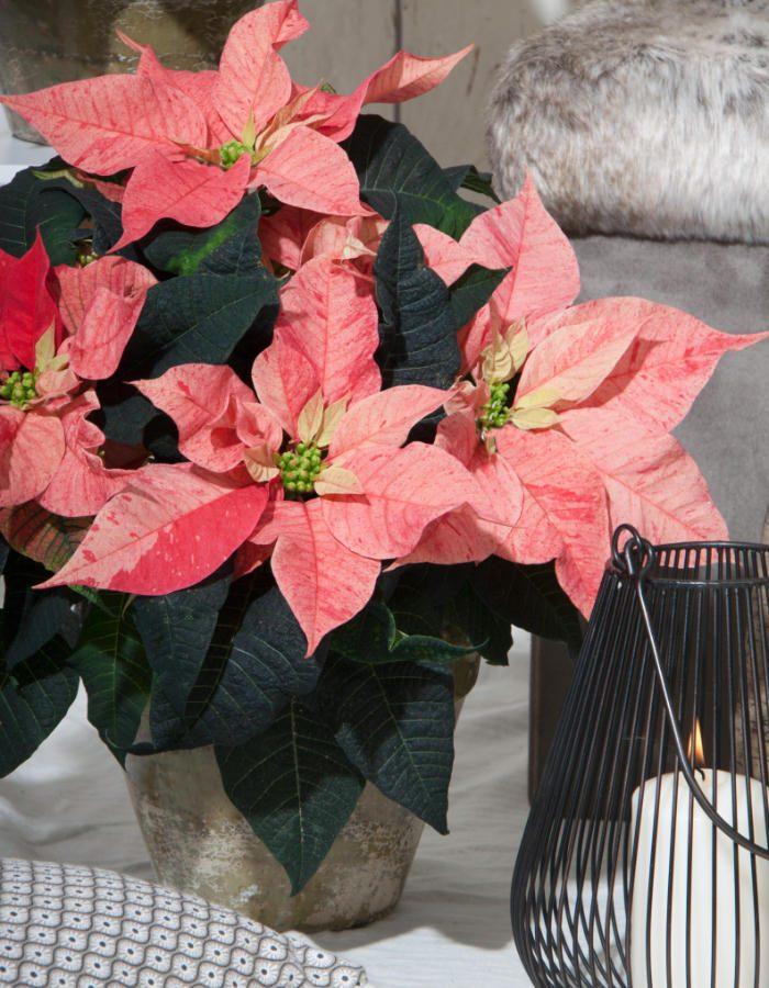 ChristmasFeelings14