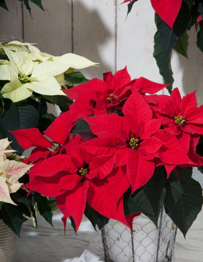 ChristmasFeelings16