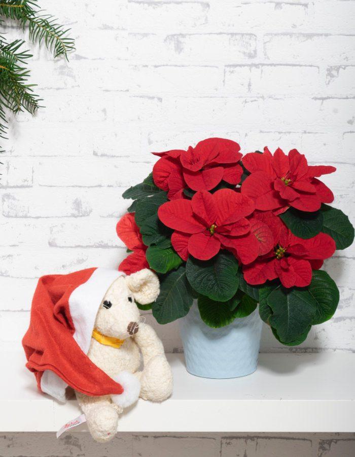 ChristmasMouse4
