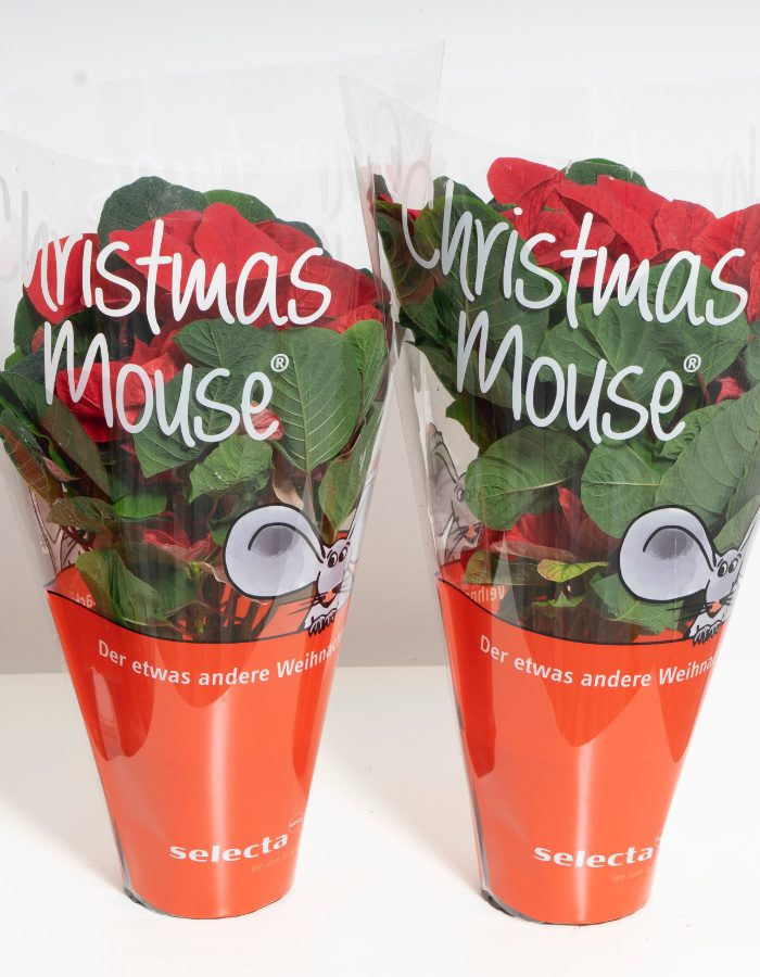 ChristmasMouse7
