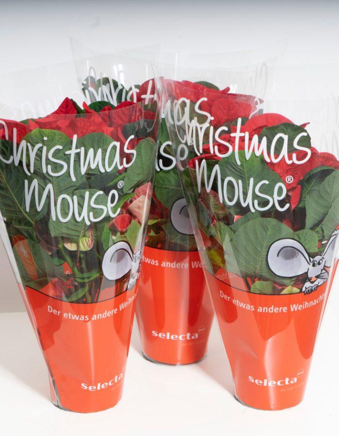 ChristmasMouse8