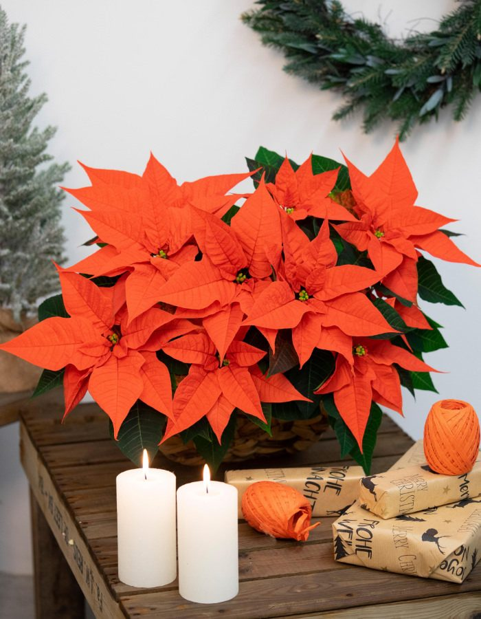 ChristmasSurprise1