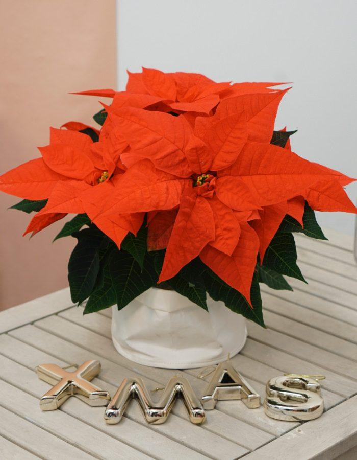 ChristmasSurprise4