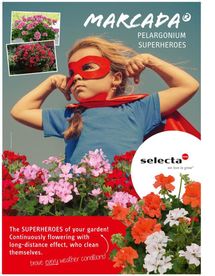 Pelargonium_Marcada_05_Poster